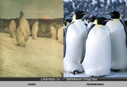 картина и пингвины