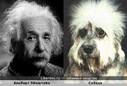 И снова - Эйнштейн и пес