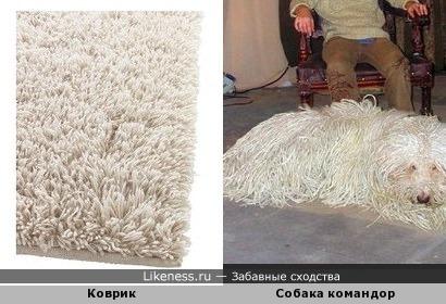 Собачка напомнила коврик))