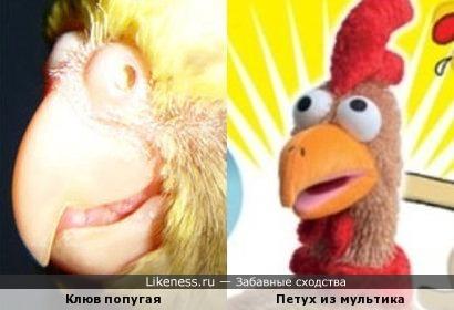 Клюв попугая похож на мультяшную курицу