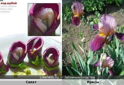 красиво оформленный салат напоминает цветы ирисы