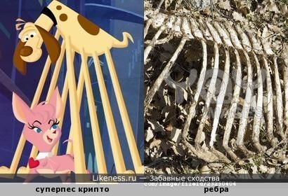 лапы мультперсонажа напомнили ребра скелета