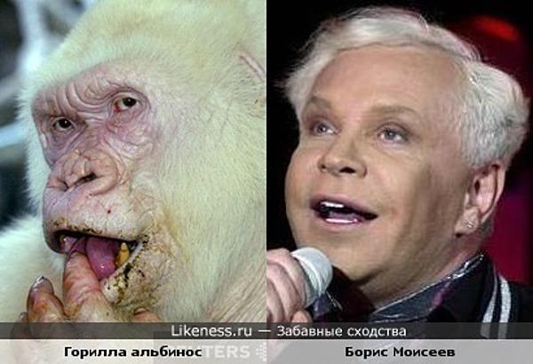 эта горилла напомнила мне Бориса Моисеева