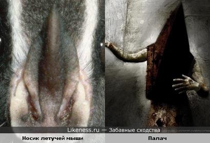 Носик летучей мышки напомнил палача с опущенными руками)))