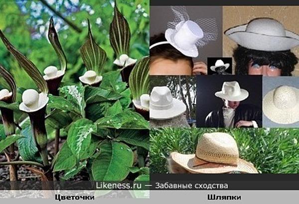 цветочки издалека похожи на белые шляпки