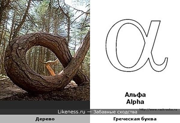 альфа-дерево