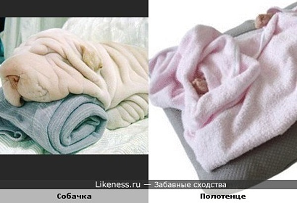 собачка, спящая на полотенце, сама похожа на полотенце (не смогла найти более подходящее фото полотенца)
