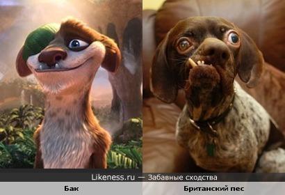 """Бак из """"Ледникового периода"""" похож на самого некрасивого пса Британии"""