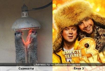 """Сурикаты греются от постера фильма """"Ёлки 3"""""""