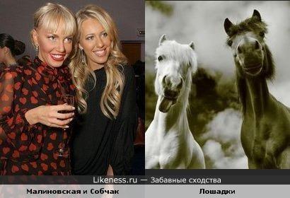 две лошади)))