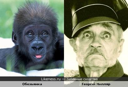 Глазки обезьяны похожи на взгляд знаменитого актера (именно глаза)