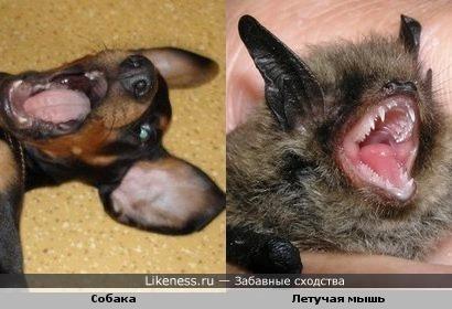 собачка и мышь имеют небольшое сходство