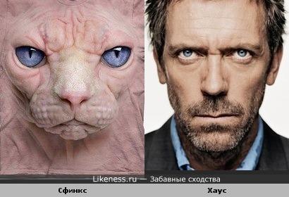Кот породы Сфинкс похож на Хауса