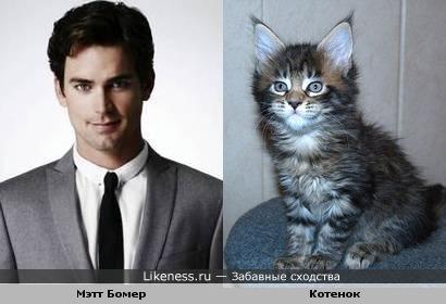 Мэтт Бомер похож на котика