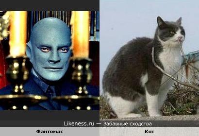 Какой-то кот похож на Фантомаса