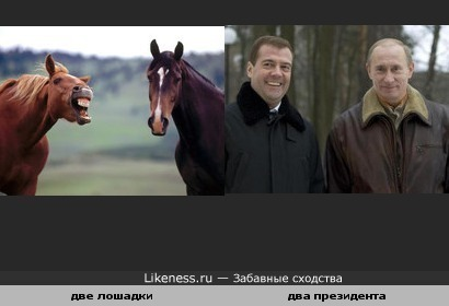 Лошадки похожи на Путина и Медведева