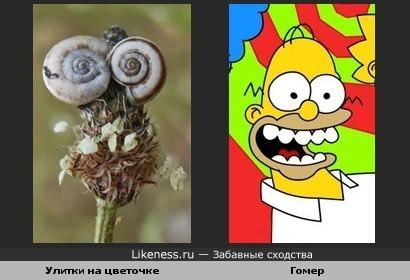 Цветочек с улитками похож на рожу ))