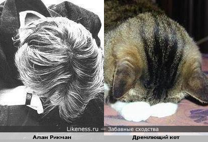 Алан Рикман похож на дремлющего кота :)