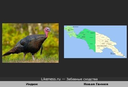 Остров Новая Гвинея похож на кого-то из отряда куриных.