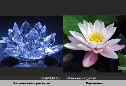 Магический кристалл похож на кувшинку(извините за очевидное сходство-просто красиво!)