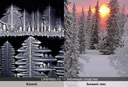 Калий под микроскопом похож на зимний лес.