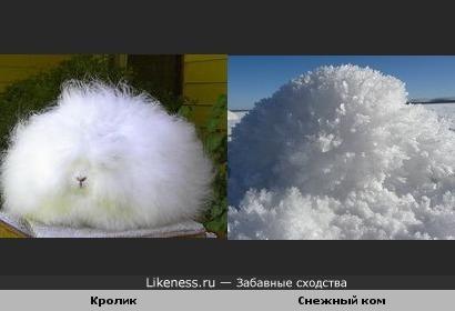 Этот чудо-кролик похож на снежный ком.