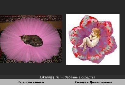 Кошка,спящая на балетной пачке ,похожа на спящую Дюймовочку.