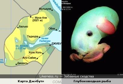 Карта республики Джибути в Африке формой похожа на эту рыбку.
