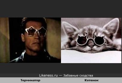 Котенок - Терминатор