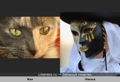 """""""Карнавальный"""" кот"""