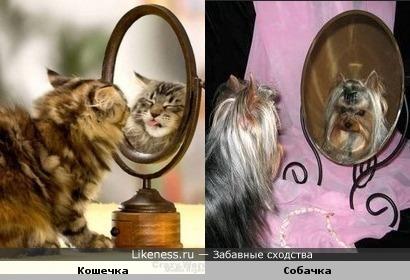 Свет мой, зеркальце...