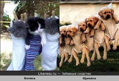 """""""Жертвы"""" большой стирки))"""
