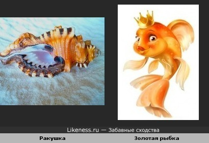 Ракушка-Золотая рыбка