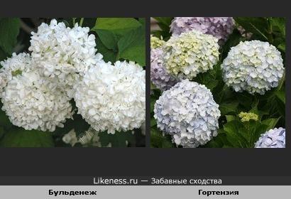Эти цветы очень похожи