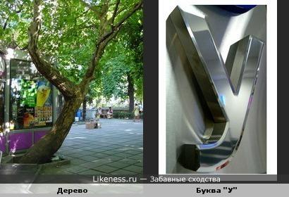 "Дерево на Пушкинской аллее в Ялте и буква ""У"""