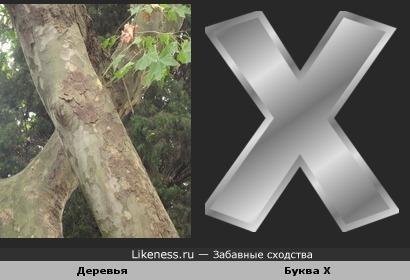 Деревья похожи на букву Х