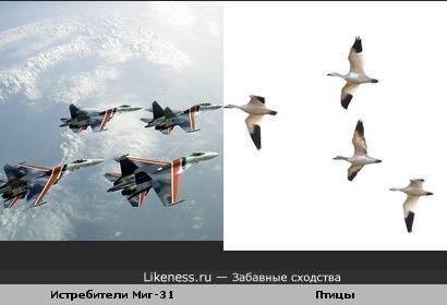 Самолеты и птицы..