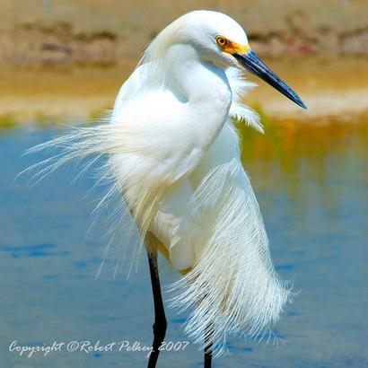 Животный мир :: Белый аист фото 0.