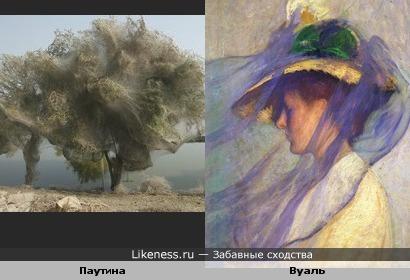 Дерево обёрнутое паутиной напомнило шляпку с вуалью
