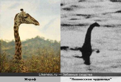 """Жираф на этом снимке напомнил знаменитую фотографию """"Лохнесское чудовище"""""""