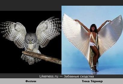 Птица - Тина Тёрнер