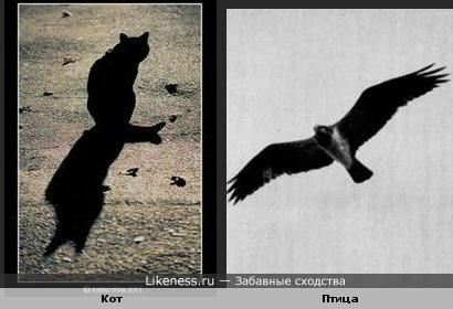 Силуэт кота с тенью похож на летящую птицу