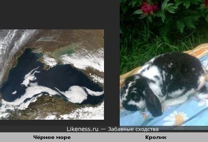 Чёрное море на снимке из космоса напомнило пятнистого кролика