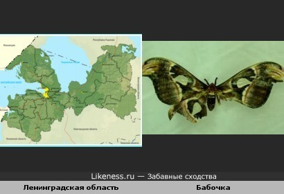 Карта Ленинградской области похожа на бабочку