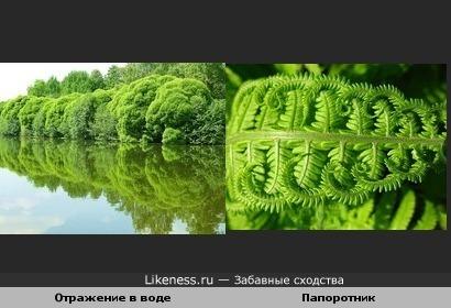 Две фотографиии из Яндекс-фоток показались мне похожими
