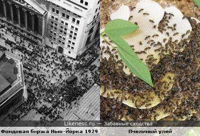 Люди и пчёлы