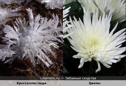 Кристаллы льда и хрзантемы