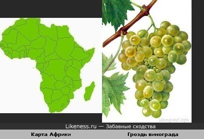Карта Африки и гроздь винограда