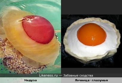 Медуза - глазунья