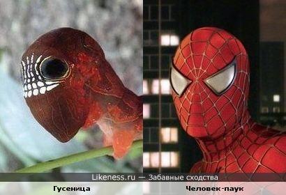 Гусеница и Человек-паук
